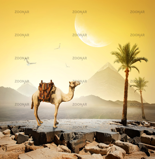 Camel and moon