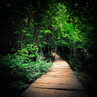 Fantasy forest with path way at tropics