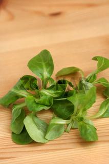 Feldsalat, Vogerlsalat, Rapunzelsalat, Nüsslisalat