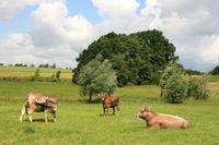 Glückliche Kühe.jpg