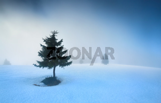 spruce tree on snow in morning fog
