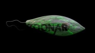 microorganism euglena, protozoa