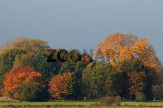 Herbstbäume 5