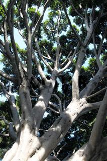 Alter Feigenbaum