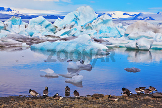 The drifting ice floes