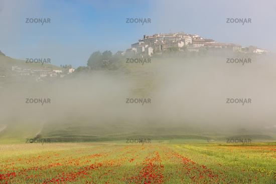 Castelluccio with poppy fields in morning Fog, Umbria, Italy