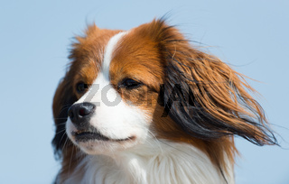 Portrait young dog