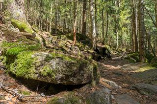 Wanderweg im Bayerischen Wald
