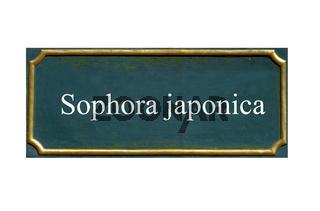 schild schnurbaum, sophora japonica, einheimisches gewaechs