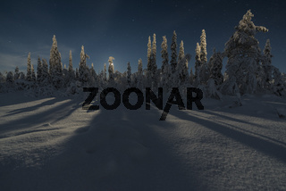 Winterlandschaft im Mondenschein, Lappland
