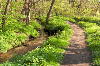 Waldbach mit Wanderweg in Schleswig-Holstein