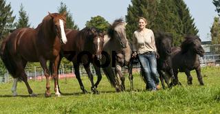 Pferdeausbildung mit Claudia Miller Natural Horsemanship