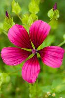 Blüte im Grünen