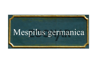 schild mespiluis germanica, mispel