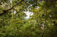 Szene im Regenwald von Costa Rica unter dem Blätterdach