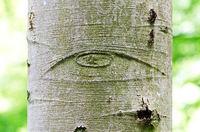 Allsehendes Auge auf einer Baumrinde