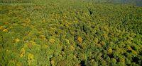Spessartwald von oben