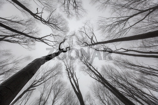 Trees Without Leaves - Look up.