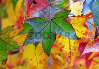 Herbstlaub_02.tif