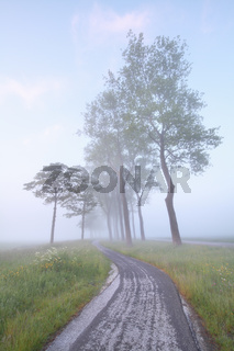 bike road between trees in mist