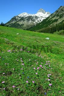 Lechquellengebirge; Alpenflora;