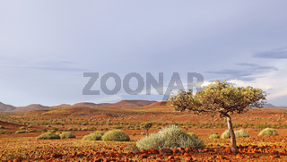 Abendlicht auf der Landschaft Palmwag, evening light at landscape of Namibia, Palmwag concession