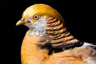 what a wonderful bird !