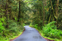 Road running in temperate rainforest of Oregon coast USA