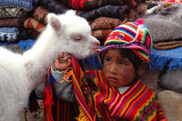AREQUIPA, PERU - JANUARY 6: Unidentified Quechua little boy in traditional clothing with baby llama on January 6, 2008 in Arequipa, Peru. The Quechua are a diverse indigenous ethnic group of the Andes.