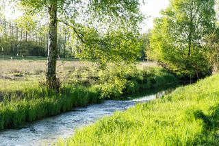 Landschaft am Dümmer See-50