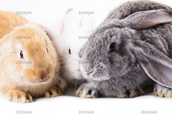Three different rabbits