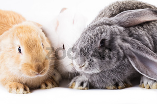 Three different rabbits