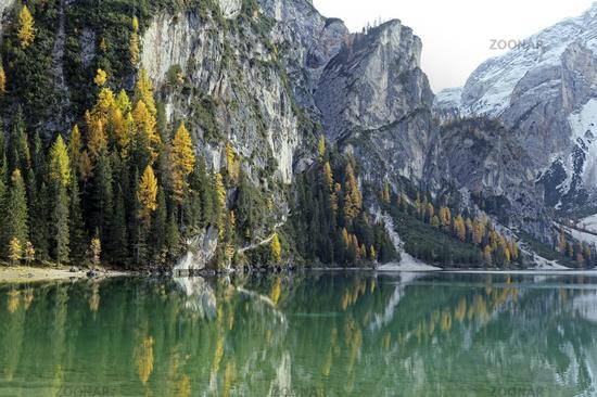 Herbstlich verfärbte Lärchen mit Spiegelung im Lago di Braies oder Pragser Wildsee, Dolomiten, Südtirol, Italien, Europa