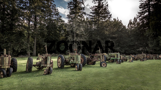 Antique Tractors in a Field