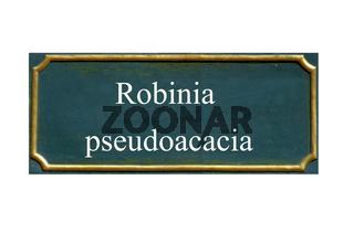 schild robinia pseudoacacia, robinie