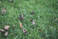 Old leaves on green grass