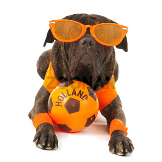 Dog as Dutch soccer supporter
