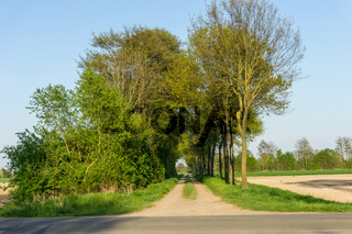 Landschaft am Dümmer See-58