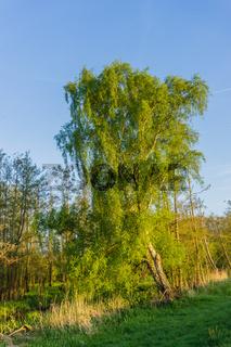 Landschaft am Dümmer See-87