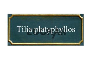 schild tilia platyphyllos, Sommerlinde