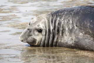 Seal at the coast
