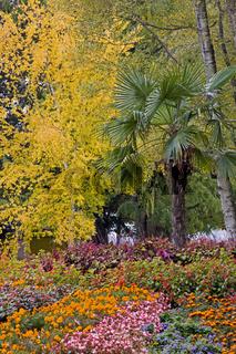 Herbst im Stadtgarten Konstanz