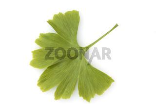 Ginkgo biloba; Ginkgonadel; Blatt
