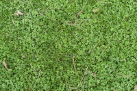 Leaves on green grass