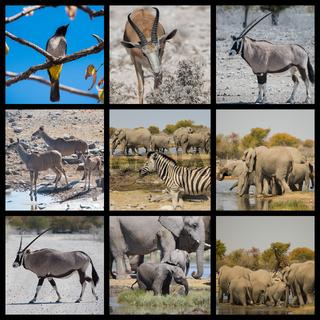 Tiere und Wüstenlandschaft in Namibia Afrika