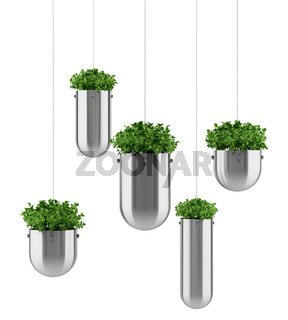 plants in hanging pots isolated on white background
