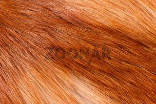 fox hairy fur texture cloth