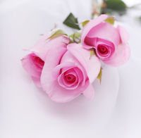 pink roses on a white silk
