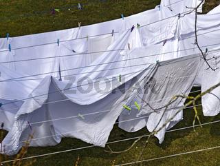 Weiße Wäsche trocknet auf Wäscheleinen