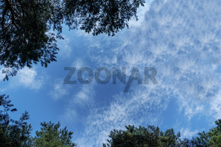 Silhouettes of trees over blue sky background